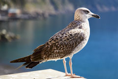 Close up of a seagull perched overlooking the sea Stock Photo