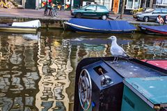 Seagull sits on boat in canal of Amsterdam Stock Images