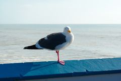 Close up of seagull standing on a pier with sea and coastline on the background. Seagull waiting on the San Clemente Pier. In Orange County, California, USA stock photo