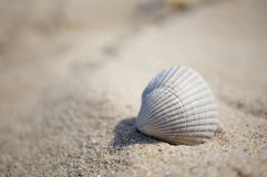 Seashell on the sand Stock Images
