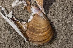 Close up of seashell in the sand. Stock Image