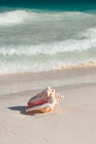 Close up of seashell on tropical beach Royalty Free Stock Images