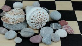 Sea underwater shells on a chessboard stock video