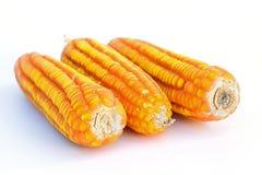 Close up secado do milho em um branco imagens de stock royalty free