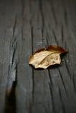 Close up seco das folhas Imagens de Stock