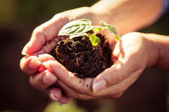 Close-up of seedling and dirt in gardeners hands Stock Image