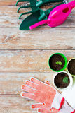 Close up of seedlings and garden tools Royalty Free Stock Photos