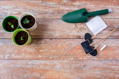 Close up of seedlings, trowel and nameplates Royalty Free Stock Image