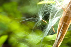 close up seeds flying Stock Photo