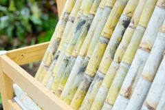 Segment of sugar cane. Close up of Segment of sugar cane royalty free stock photos