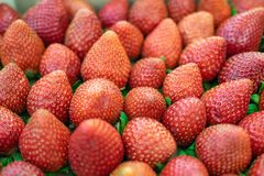 A selection of freshly picked strawberries stock images