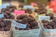 Organic blackberries in basket with plastic liner at farmer mark. Close-up, selective focus heap of organic blackberries in basket with plastic liner. Fresh Royalty Free Stock Images