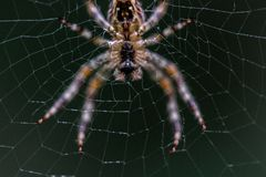 Close-up Selective Focus Photography of Barn Spider on Web Stock Images