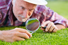 Close up of senior gardener cutting grass 2 Royalty Free Stock Image