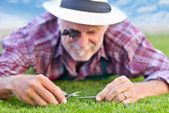 Close up of senior gardener cutting grass 3 Royalty Free Stock Photo