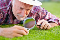 Close up of senior gardener cutting grass Stock Photos
