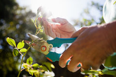 Close-up of senior woman cutting flower stem with pruning shears Stock Photography