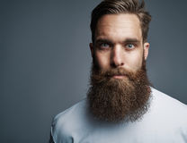 Close up on serious man with long beard. Close up on single serious handsome young Caucasian man with muscular build and well groomed beard over gray background Stock Images