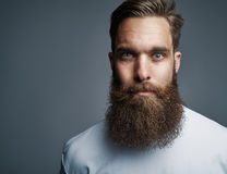 Close up on serious man with long beard. Close up on single serious handsome young Caucasian man with muscular build and well groomed beard over gray background Stock Image