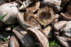 Old dry coconut husk on ground royalty free stock images