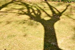 Close up of a shadow of a maple tree on the grass at a green park with some dry leaves on the ground. In a sunny day royalty free stock photo