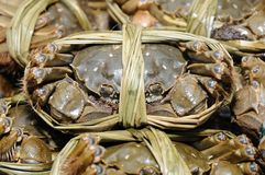 Close up of shanghai crabs Royalty Free Stock Image
