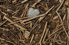 Close up of the shape of a stone heart surrounded by small pieces of wooden sticks. royalty free stock image