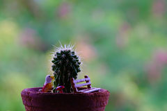 Close up of shaped cactus. Small cactus in flower pots with cofee bean ,Nature Stock Photos