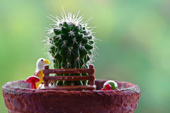 Close up of shaped cactus. Small cactus in flower pots with cofee bean ,Nature Royalty Free Stock Photo