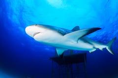 Close up Shark Royalty Free Stock Photos