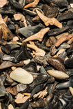 Shark Tooth Background. A close up of shark teeth in a shop in Cape Cod Massachusetts royalty free stock photo