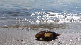 Close-up Shell em uma areia da praia filme