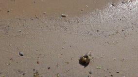 Close-up Shell em uma areia da praia video estoque