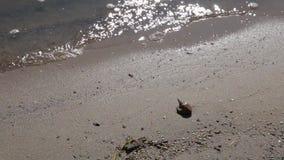 Close-up Shell em uma areia da praia vídeos de arquivo