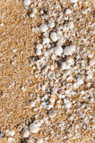Close Up Of Shell On The Sand At The Beach Royalty Free Stock Image