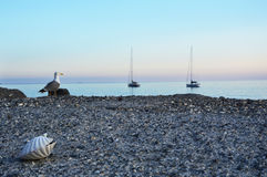 Close up on a shell with seagull on the background watching sunset and sailboats, Camogli, Liguria, Italy.  Royalty Free Stock Photos