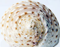 Shell texture. Stock Photo