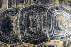 Turtleshell pattern royalty free stock photo