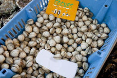 Close-up of shellfish in container at store Royalty Free Stock Photography