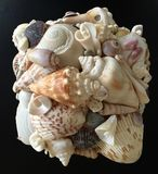 Close-up of Shells from Florida royalty free stock photos