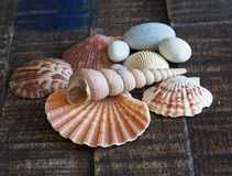 Close up shells and pebbles still life on a old plank wooden des. K with veneer Stock Images