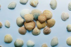 Close up of shells. Shells close up on a white background Royalty Free Stock Photo
