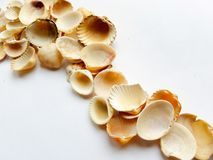 Close up of shells. Shells close up on a white background Stock Photo