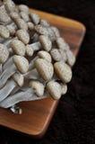 Close up Shimeji Mushroom Stock Images