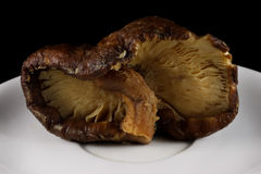 Close up of Shitake Mushroom. Stock Photo