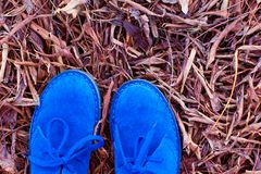 Close-up of shoes. Close-up of blue suede shoes in autumn leaves Stock Photo