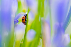 Close up shoot of a ladybug Stock Image