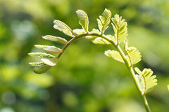Close up shoot leaves. In sunrises Royalty Free Stock Photo