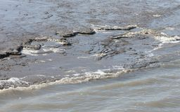 Close up of the shoreline of the Waddensea Stock Images