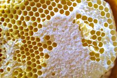 A close-up shot of an abandoned bee hive, royalty free stock photos